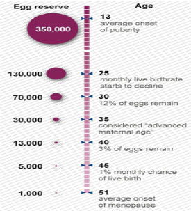 No. of eggs at different phases of life
