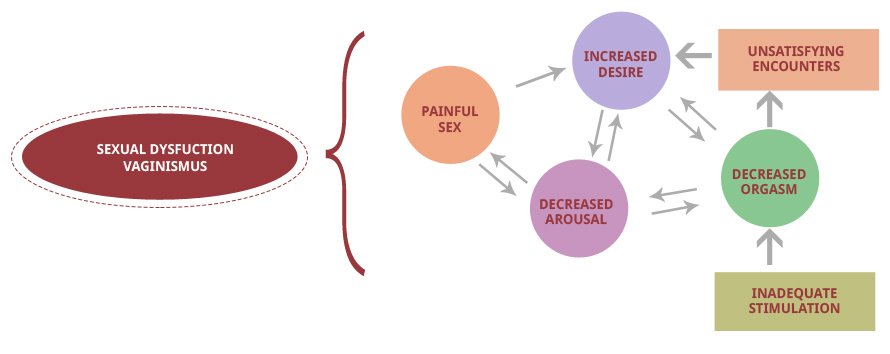 Female Sexual Disorders Cycle
